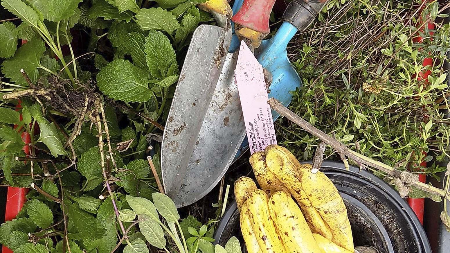 Pflanzen, Grabschaufeln und Arbeitshandschuhe