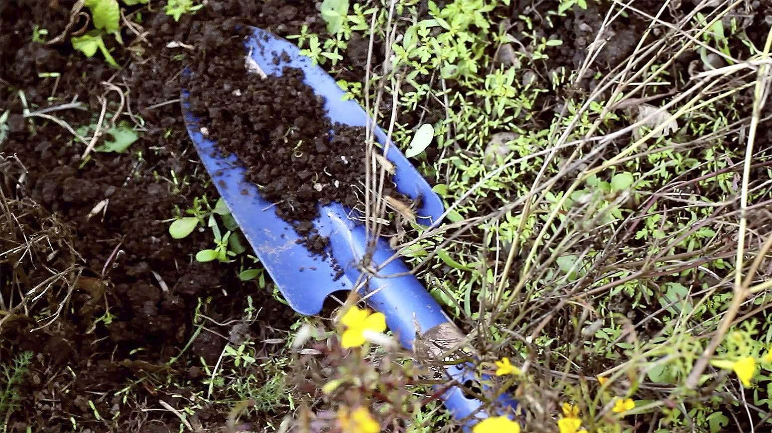 Eine blaue Gärtnerschaufel liegt mit Erde bedeckt im Beet.