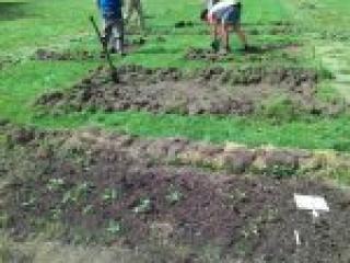 Fleißige Gärtner und Gärtnerinnen legen Beete an.