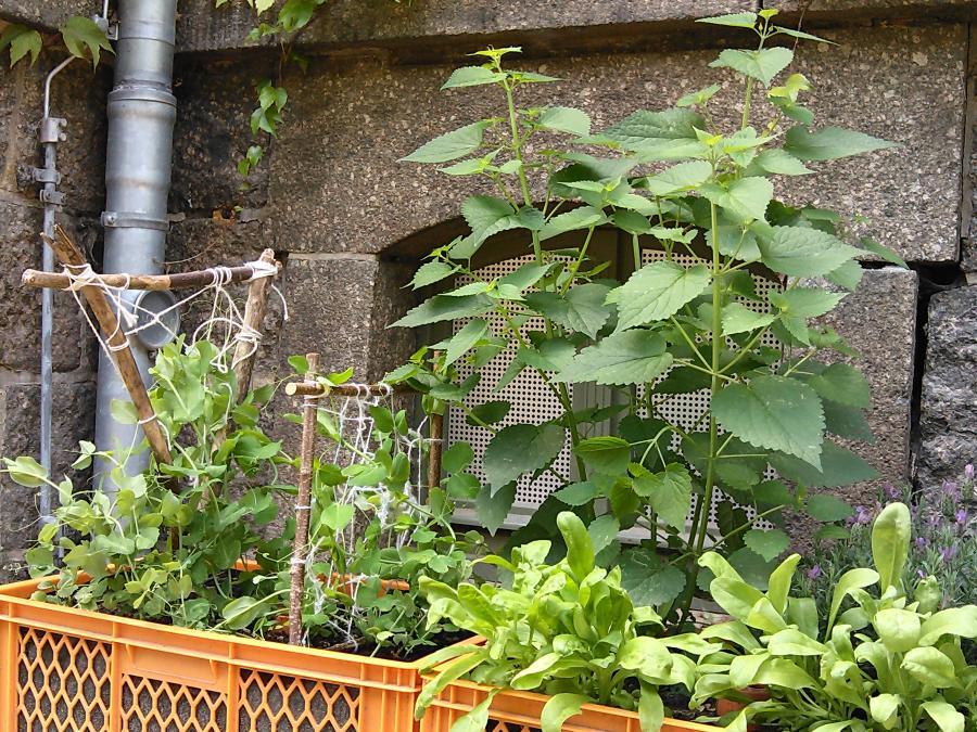 Kinderhand hält Pflanzen-Samen