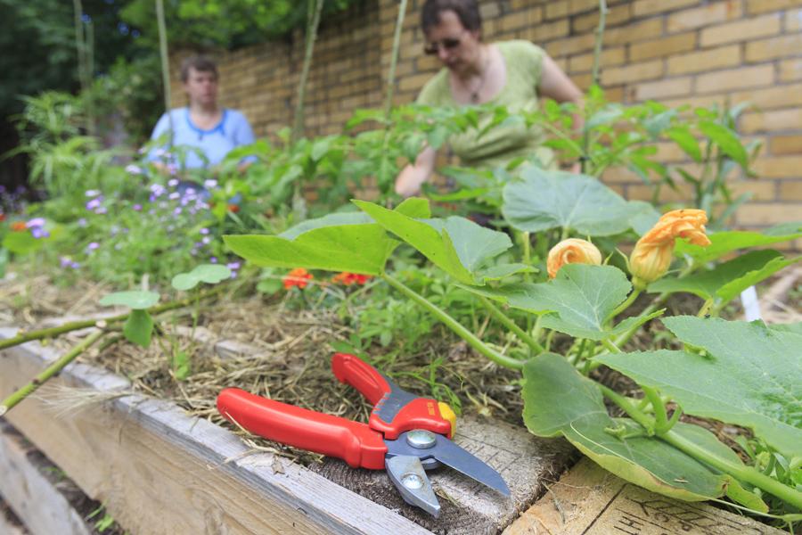Gartenschere liegt am Rande eines Hochbeets.