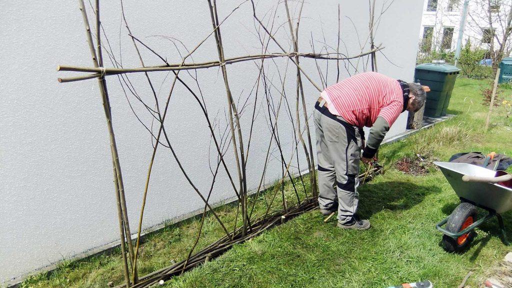 Weiden-Zaun im Bau