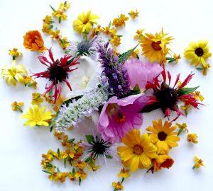Blütenköpfe auf dem Tisch arrangiert
