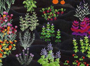 Farbige Illustration einer Beetlandschaft mit blühenden Kräutern und anderen kleineren Pflanzen