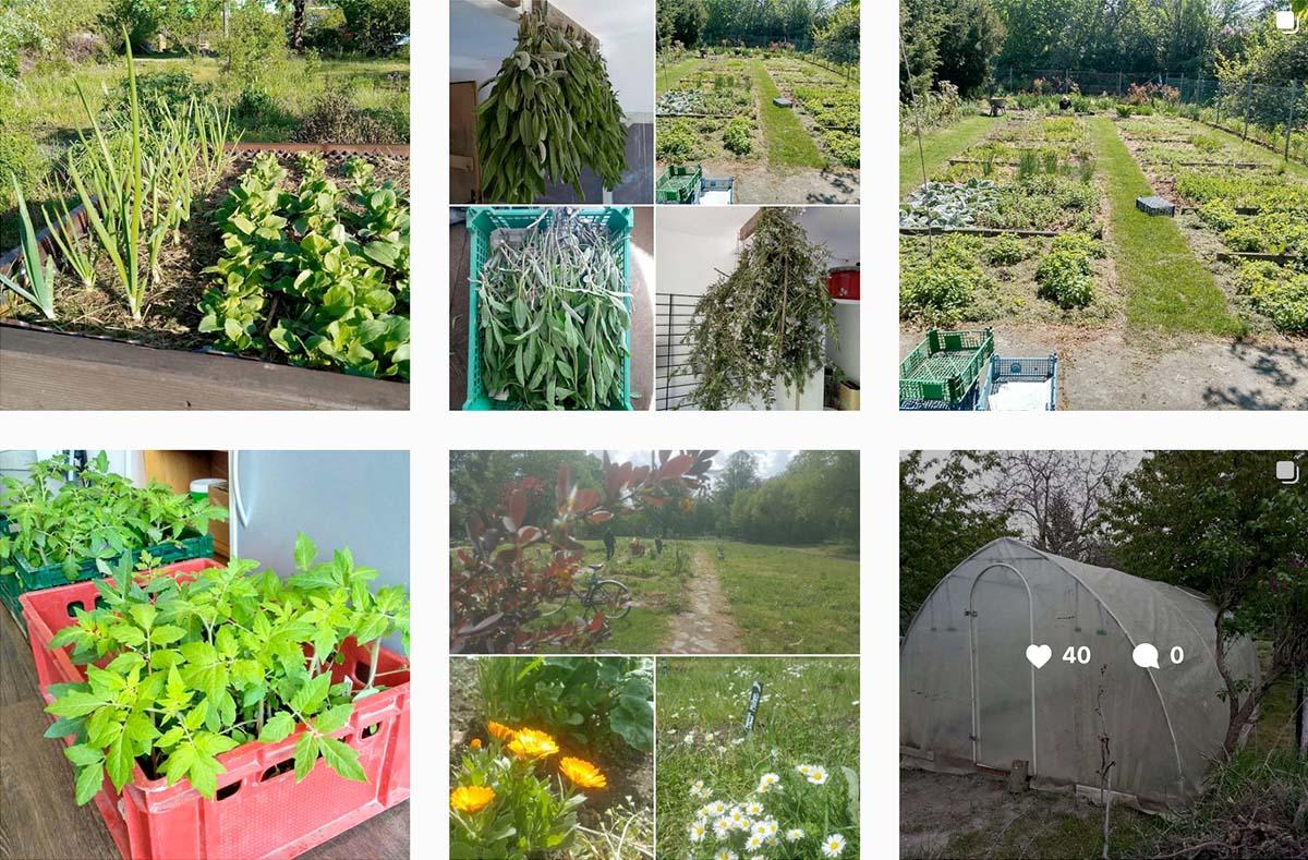 Bilderquerschnitt – 6 Bilder zeigen das Gewächshaus sowie diverse Blumen- und Nutzbeete